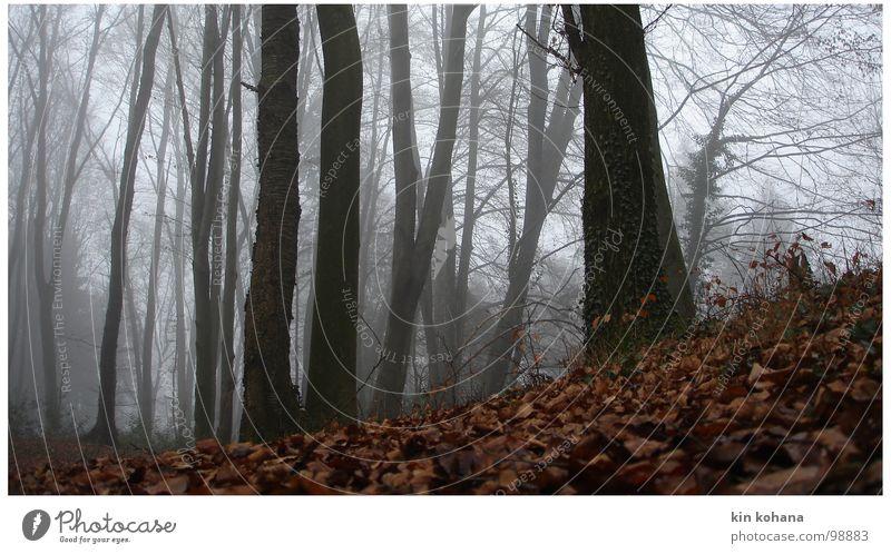 flucht Baum ruhig Blatt Einsamkeit Wald dunkel kalt Herbst grau Wege & Pfade Angst Nebel nass Perspektive Hoffnung Trauer