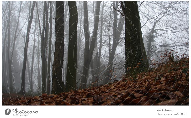 flucht ruhig Herbst Nebel Baum Blatt Wald Wege & Pfade liegen dunkel kalt nass grau Hoffnung Trauer Einsamkeit Angst Verzweiflung Perspektive Vergänglichkeit