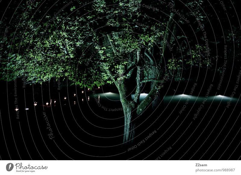 Abends am See Natur Farbe Sommer Baum Erholung Einsamkeit Landschaft ruhig dunkel Beleuchtung natürlich Idylle elegant modern frisch