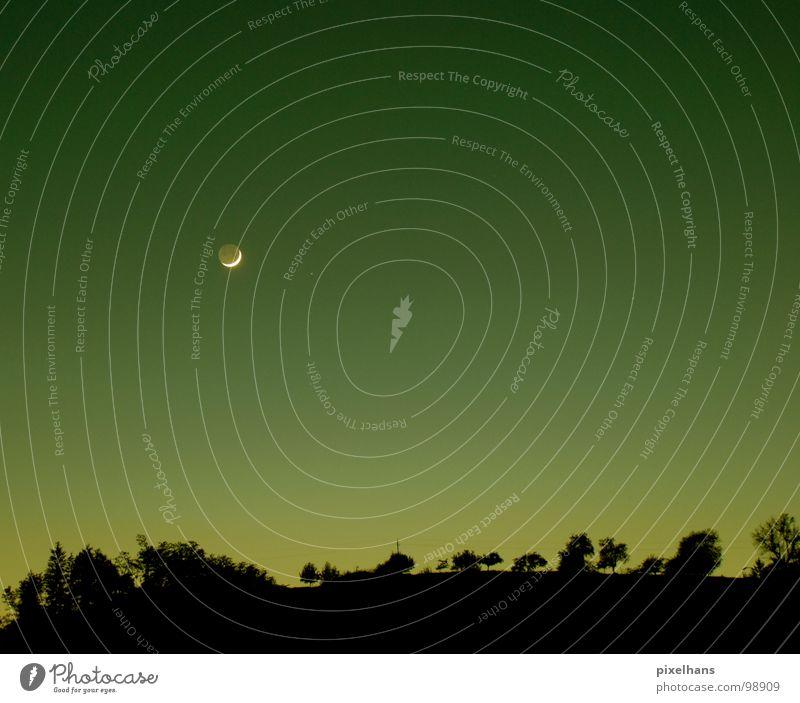 one night in the desert Baum grün Sommer schwarz gelb dunkel Landschaft Wetter Nachthimmel Mond Abenddämmerung Farbverlauf Baumreihe Klarer Himmel