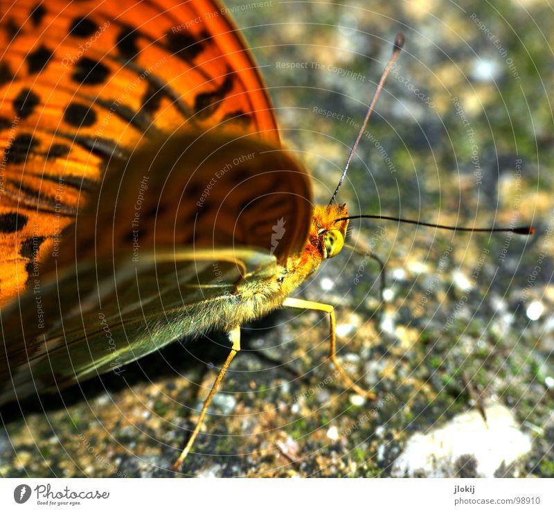 Zerschmetterling II Natur schön Blume Pflanze Ernährung Tier Blüte Frühling Stein Beine orange Lebensmittel fliegen Beton Bodenbelag violett