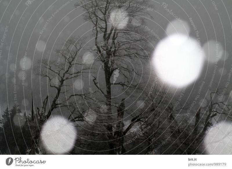 !Trash | Schneeböllern Natur Einsamkeit Winter Umwelt Traurigkeit Kunst Feste & Feiern Schneefall Eis Angst Energie Klima bedrohlich geheimnisvoll Frost