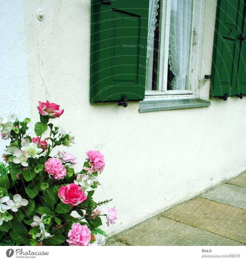 a rosegarden Stil Häusliches Leben Haus Dekoration & Verzierung Blume Rose Topfpflanze Menschenleer Mauer Wand Fenster Stein Kitsch trashig grün rosa Romantik