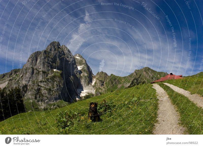 heile Bergwelt II Berge u. Gebirge Alm steil Wiese Gras Tanne Stall Scheune abgelegen schön Gesundheit Hund Tier Fußweg Fahrweg steinig z'Bärg Felsen Stein
