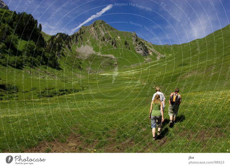 heile Bergwelt III Natur schön Blume Wiese Gras Berge u. Gebirge Stein Gesundheit wandern gehen Felsen Idylle Tanne Amerika Bach Motivation