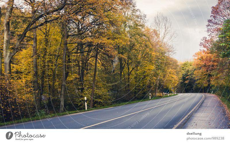 Herbstidylle Himmel Natur blau grün rot Landschaft ruhig Wolken Wald kalt Umwelt gelb Straße Wege & Pfade grau