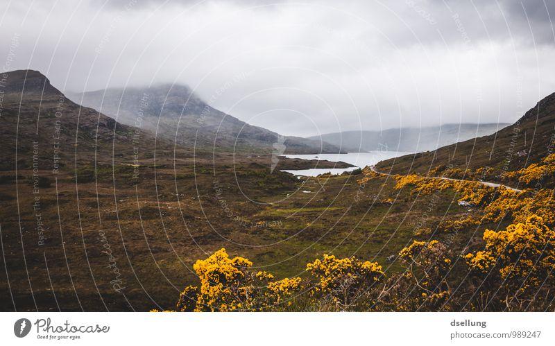 allein. menschenleer. Himmel Natur grün Wasser Sommer Landschaft Wolken kalt Umwelt gelb Herbst Wiese natürlich Frühling grau Gesundheit
