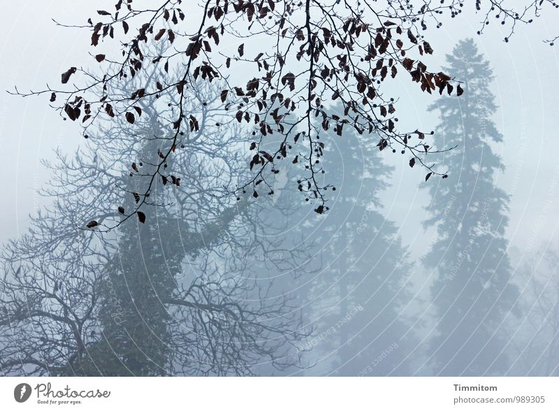 Vorhang! Schnell! Himmel Natur Blatt Landschaft Winter Wald Umwelt Gefühle natürlich grau Holz braun Wetter Nebel authentisch ästhetisch