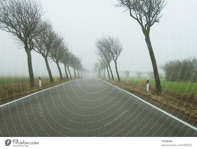 windschief ll Baum Herbst Winter Nebel schlechtes Wetter grau nass Fahrbahn Feld Wiese Einsamkeit Horizont Jahreszeiten ungemütlich trüb Regen grün braun Straße