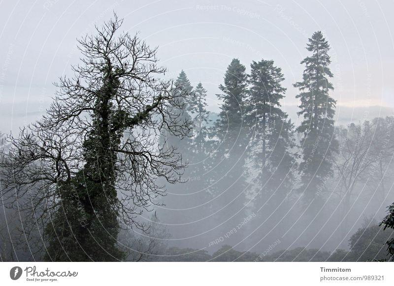 Der Dirigent zürnt! Himmel Natur Pflanze Baum Landschaft Wolken schwarz Wald Umwelt Herbst Gefühle natürlich grau Wetter Nebel authentisch