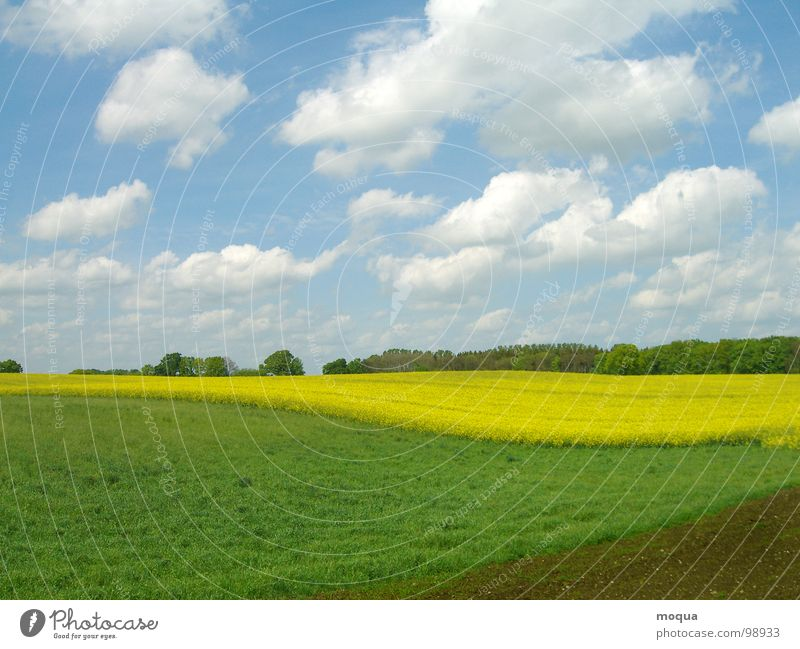 rapsfeld Natur Himmel weiß Baum grün blau Sommer Wolken gelb Wald Wiese Frühling braun Feld Wetter Horizont
