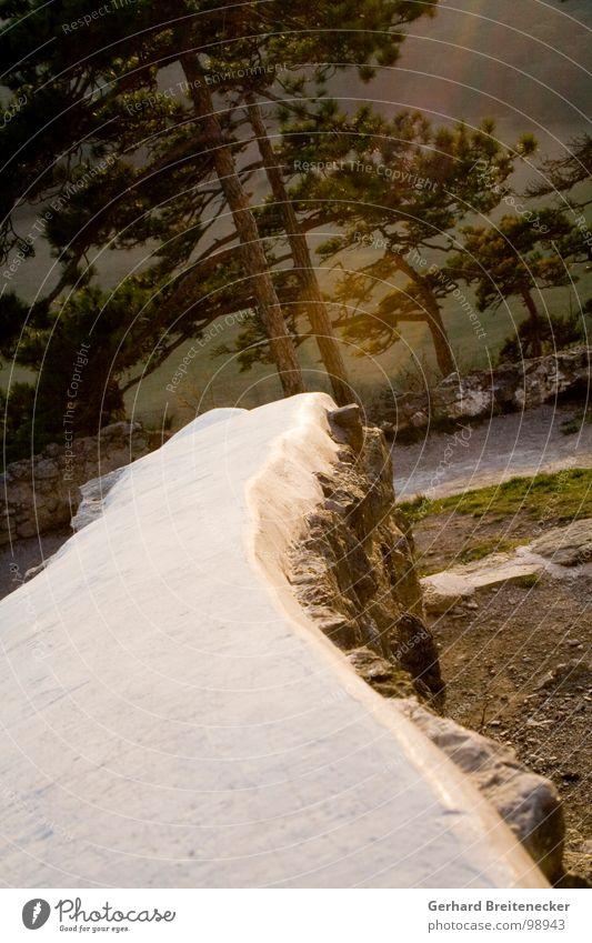Neigungsgruppe Baum Wald Mauer verrückt Wald-Kiefer