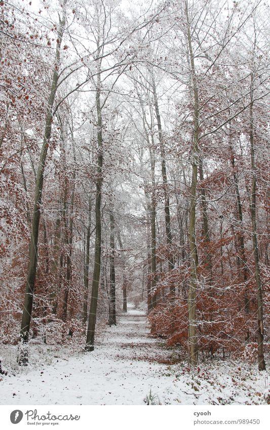 winterwonderland Natur weiß Erholung Einsamkeit ruhig Winter Wald kalt Schnee Wege & Pfade Glück Zeit Stimmung Schneefall Zufriedenheit Klima