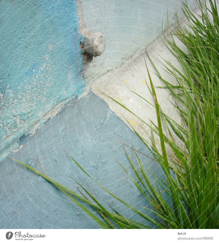 GRASWINKEL weiß grün blau Pflanze Sommer Ferien & Urlaub & Reisen Einsamkeit Straße Wiese Wand Gras Garten grau Mauer Wege & Pfade Kraft