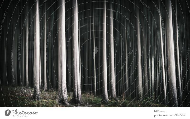 spooky trees V Pflanze Baum Wald Urwald trashig verrückt schwarz träumen Angst gruselig Bewegung chaotisch Märchenwald Schwache Tiefenschärfe Unschärfe
