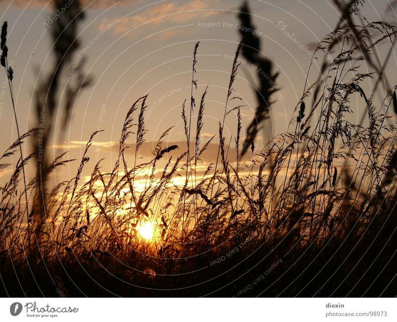 When The Sun Goes Down...Vol.2 Natur schön Pflanze Sonne Wolken ruhig Erholung Umwelt Landschaft Wiese Gras Glück Traurigkeit träumen Wetter Zufriedenheit