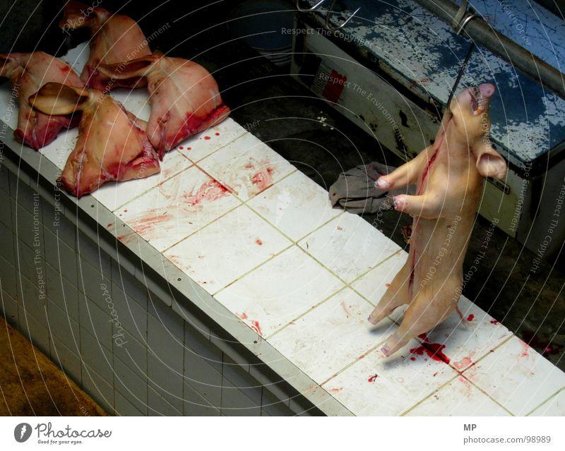 kaltes grausen Krieg Tier Tod Umweltschutz Landwirtschaft Bauernhof gruselig Kriminalität Lebensmittel dumm Fleisch Blut Ekel Schwein Hausschwein