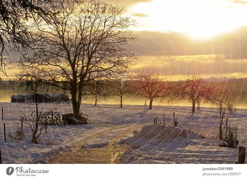 Wintersonne kalt Sonnenuntergang Baum schön Himmelskörper & Weltall Natur Schnee Eis Frost Landschaft
