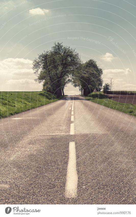 Zielgerade Baum Verkehrswege Straße Fahrbahnmarkierung Hoffnung Wege & Pfade Zukunft Farbfoto Gedeckte Farben Außenaufnahme Menschenleer Tag