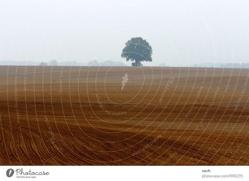 Einzelkämpfer Natur Landschaft Erde Himmel Wolken Herbst Winter schlechtes Wetter Nebel Regen Pflanze Baum Wiese Feld Linie verblüht kalt nass braun Traurigkeit