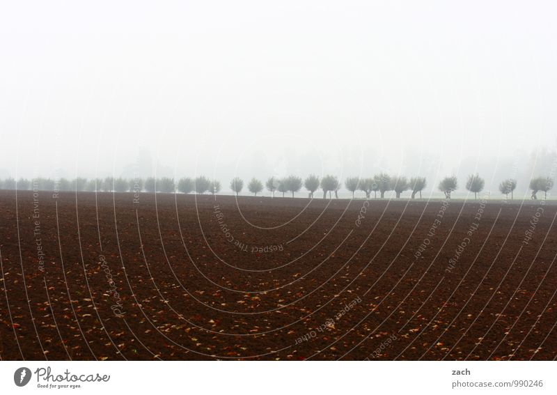 In Reihe Natur Himmel Wolken Herbst Winter schlechtes Wetter Nebel Regen Pflanze Baum Weide kurzkopfweide Obstbaum Wiese Feld Allee Traurigkeit dunkel kalt