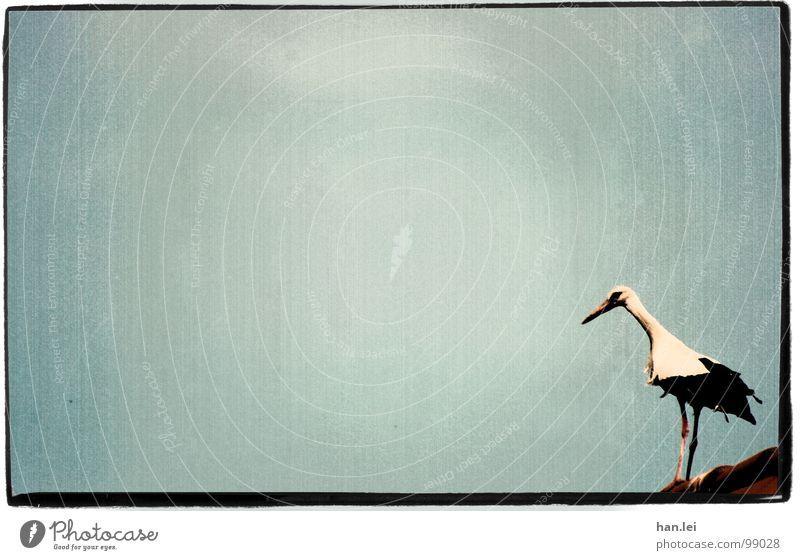 Storch alt Tier Vogel fliegen Geburtstag Dach retro Feder Rahmen Jubiläum Schnabel Geburt Storch Randerscheinung