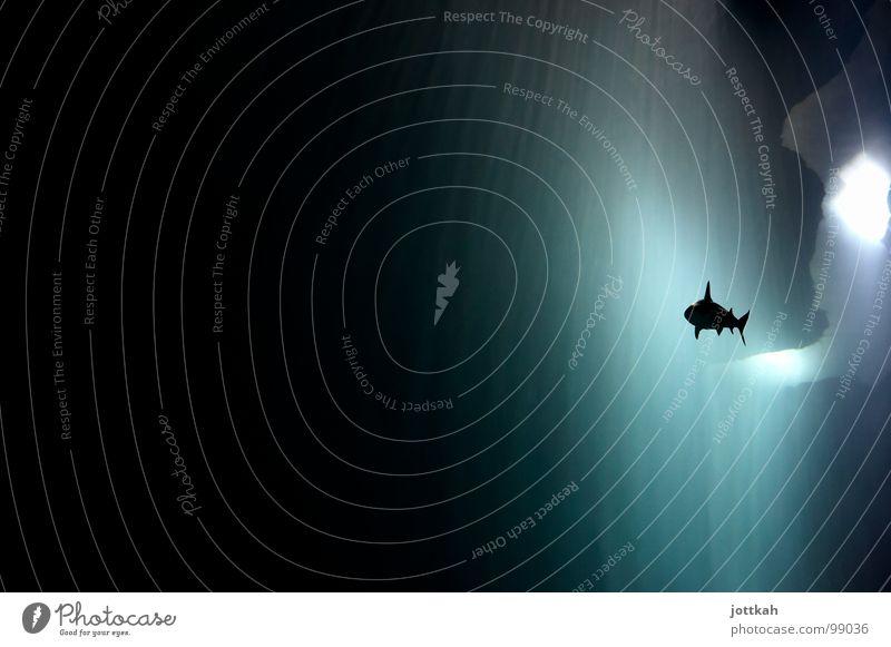 Hai Fisch Wasser Unterwasseraufnahme Tier dunkel Beleuchtung Angst gefährlich bedrohlich Haifisch Schwimmhilfe Höhle gleiten majestätisch