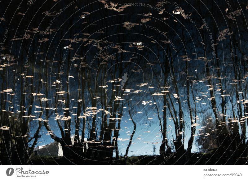 In a dream Natur Winter Trauer Fluss Verzweiflung Bach