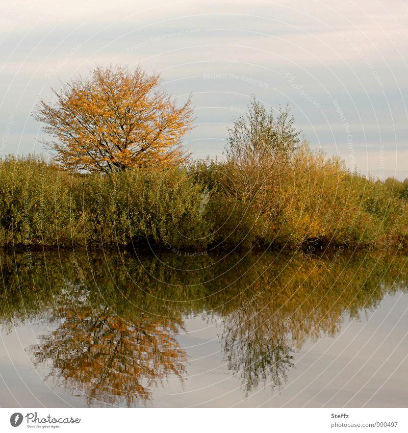Stille und friedliche Stimmung am Seeufer im Herbst ruhig Frieden Erholung Wasserspiegelung Wasseroberfläche Sträucher Laubbäume Herbstbäume ruhiges Wasser
