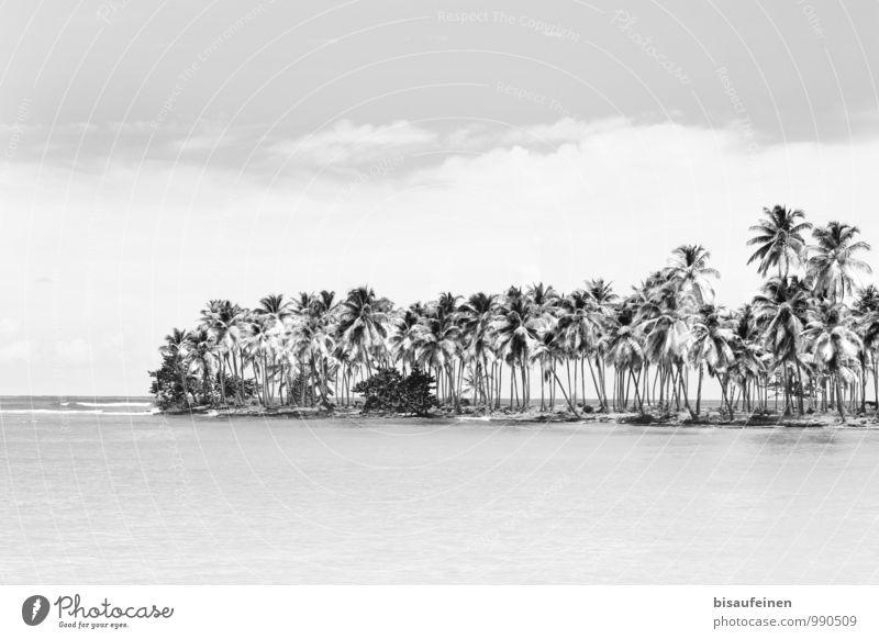 Bacardi Feeling... Landschaft Pflanze Wasser Schönes Wetter Wald Küste Strand Bucht Meer Golf von Mexico Insel Erholung exotisch schwarz weiß Zufriedenheit