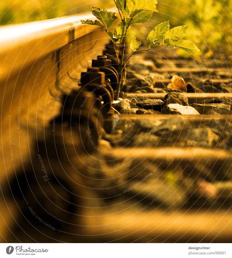 Entropie Gleise Stahl Eisen fahren Ferien & Urlaub & Reisen Verfall Vergänglichkeit zurück Schwellen Schraube Eisenbahn Stein Pflanze wuchern Natur Kies