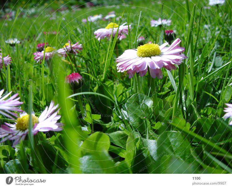 fruehlings wiese Wiese Frühling Blume