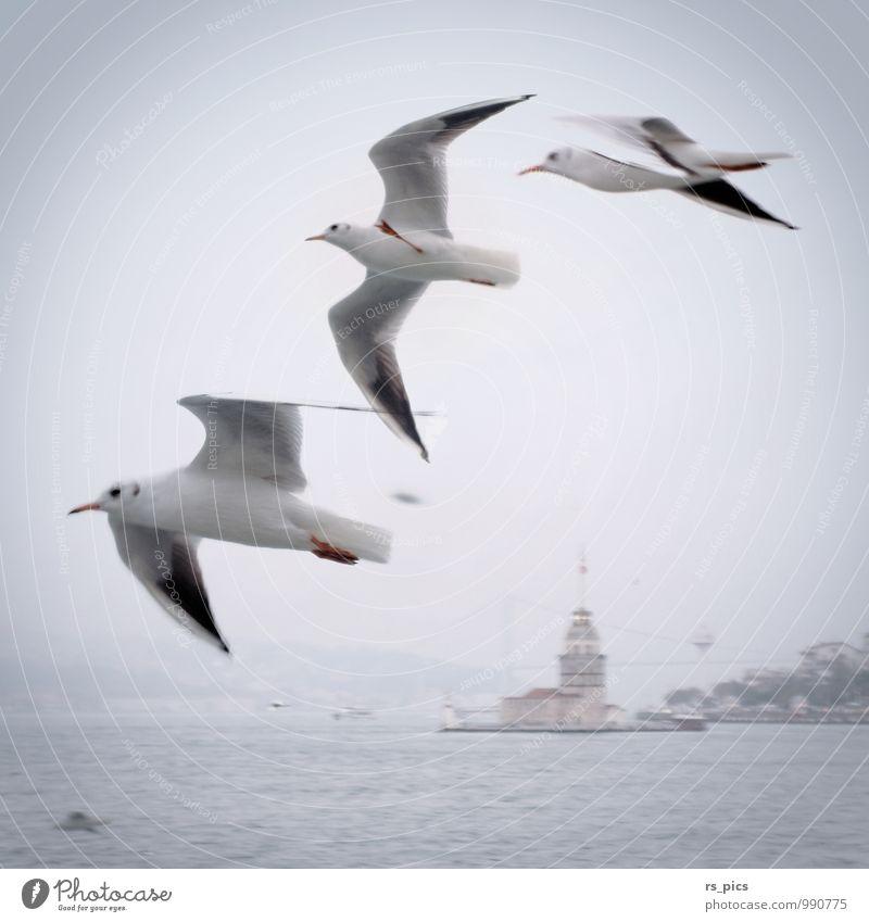 Flugbegleiter Ferien & Urlaub & Reisen Sightseeing Städtereise Vogel Flügel Möve 3 Tier Tiergruppe fliegen ästhetisch klug Geschwindigkeit schön weich Freude
