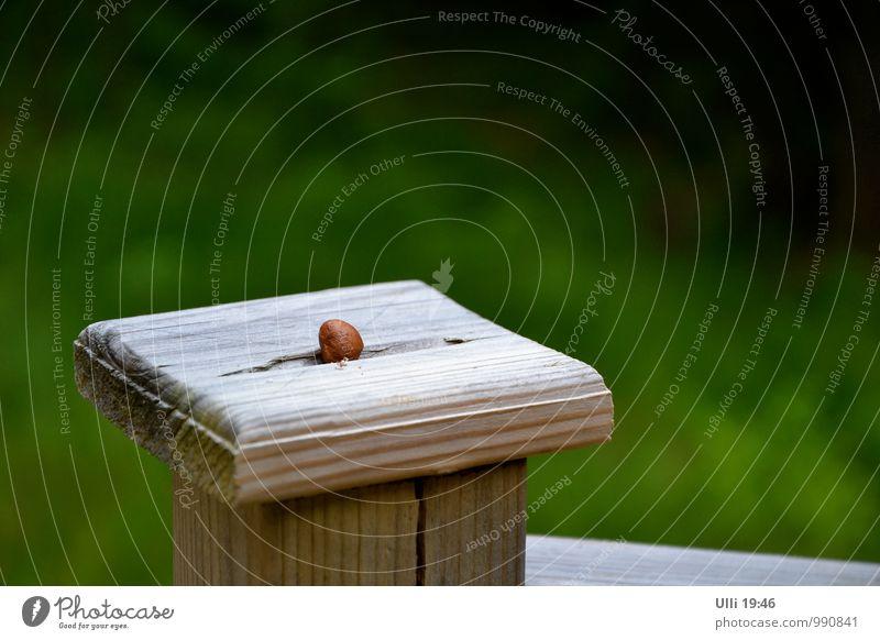 Warten auf den Eichelhäher.................. Natur Ferien & Urlaub & Reisen grün Sommer Einsamkeit ruhig Holz Zeit Garten braun Stimmung warten Schönes Wetter