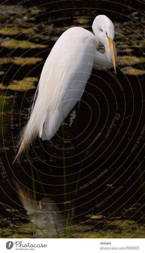 Wasser Tier Vogel Wildtier frisch Gelassenheit