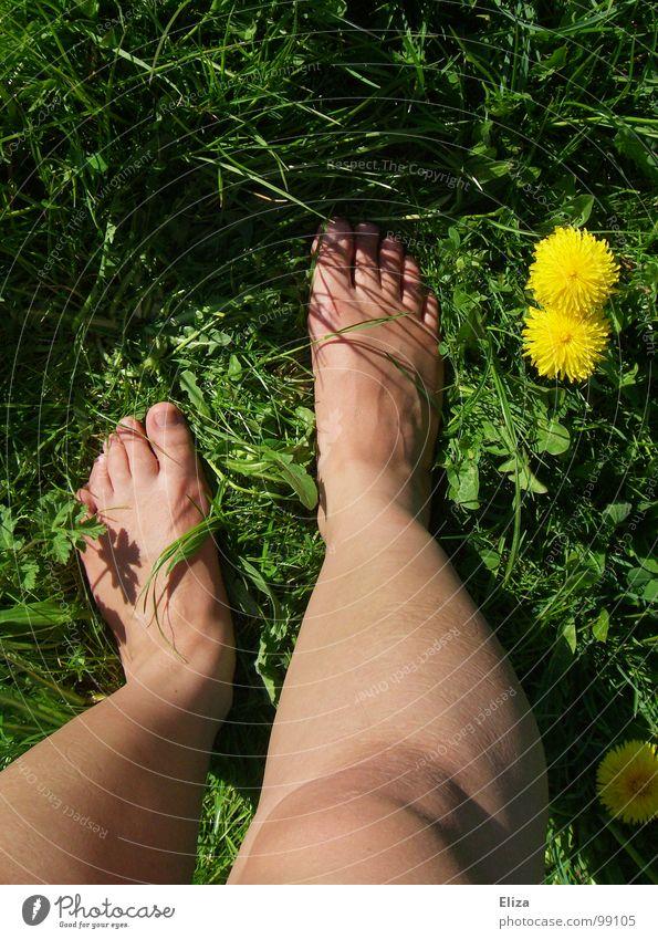 Nackte Beine in der grünen Wiese mit Löwenzahn im Sommer gelb Frühling Blume Pflanze Blüte genießen Erholung Gras Barfuß Blumenwiese Frühlingsgefühle Zehen Duft