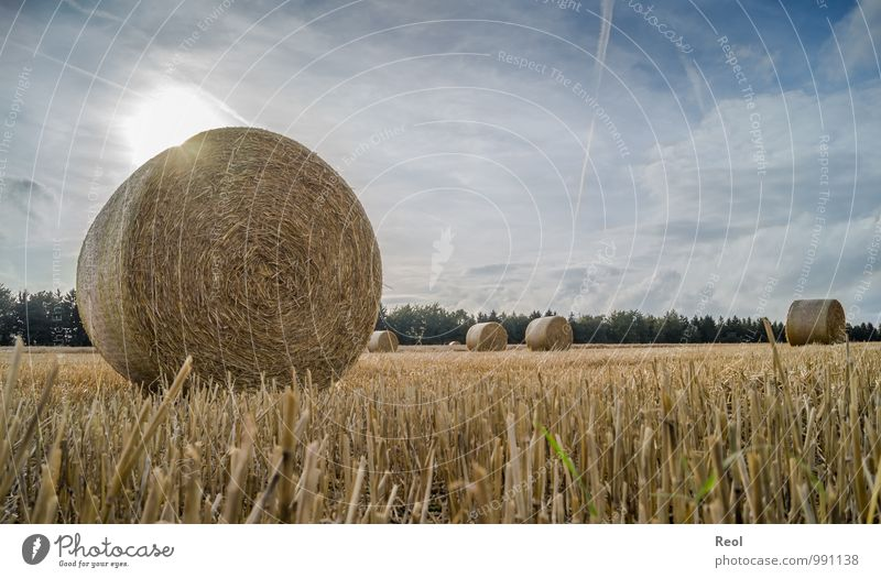 Strohballen Landwirt Umwelt Natur Urelemente Himmel Wolken Herbst Schönes Wetter Pflanze Grünpflanze Nutzpflanze Getreide Getreidefeld Getreideernte Ernte Feld