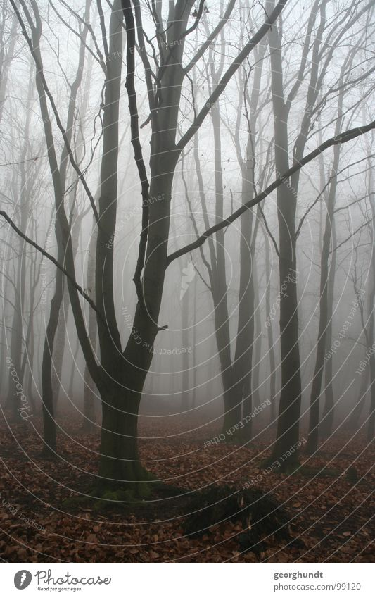 Märchenwald weiß Baum Winter Wald kalt grau Nebel Raureif Dezember Hexe Harz Bruchstück Hexentanzplatz
