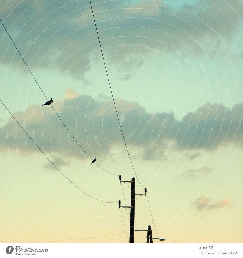 Annäherungsversuch Elektrizität Kabel Zusammensein Oberleitung Vogel Wolken Flirten Elektrisches Gerät Technik & Technologie Frieden Stromversorgung