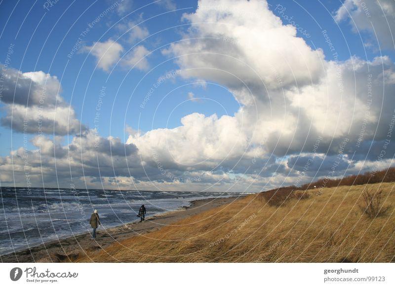 Das Poel-Licht Insel Poel Wolken Wolkenwand Küste Strand Sandstrand Dünengras Meer Sturm Unwetter unruhig Deutschland Stranddüne Wasser Wetter Wind Bewegung