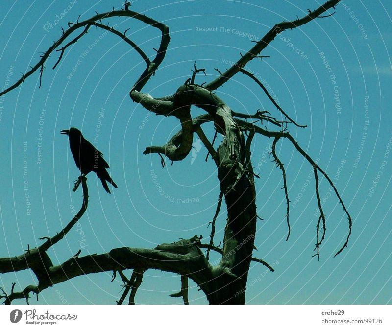 crehe2 Himmel Baum grün blau schwarz Vogel Sträucher Ast Desaster Zweig Märchen blau-grün