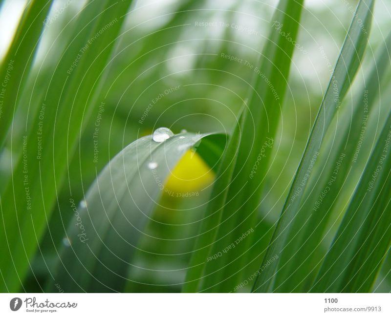 Tautropfen grün Wiese Gras Wassertropfen Seil