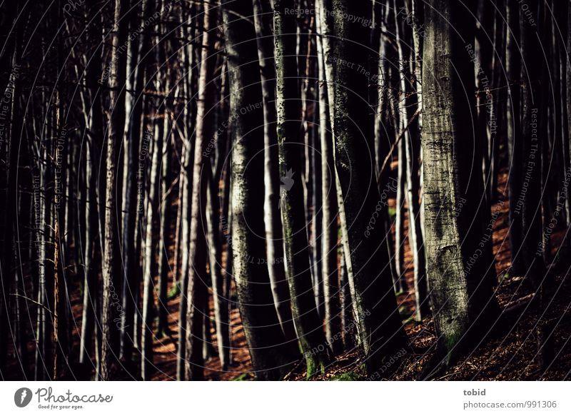 Black Forrest Natur Landschaft Pflanze Herbst Schönes Wetter Baum Wald Hügel dunkel elegant kalt Idylle Blatt herbstlich Herbstlaub Buche Baumstamm