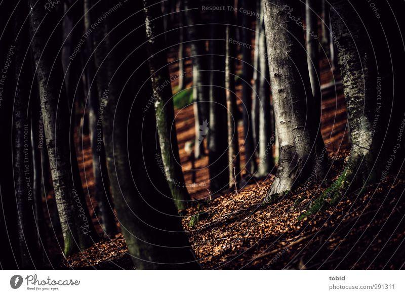 Mystischer Wald Natur Landschaft Pflanze Herbst Schönes Wetter Baum Buche Hügel Berge u. Gebirge dick dunkel Idylle Macht Baumstamm Baumrinde Blatt Herbstlaub