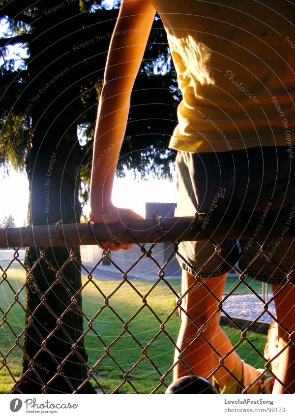 fence hopping Sommer Shorts Licht sun heat tree light sunshine skinny