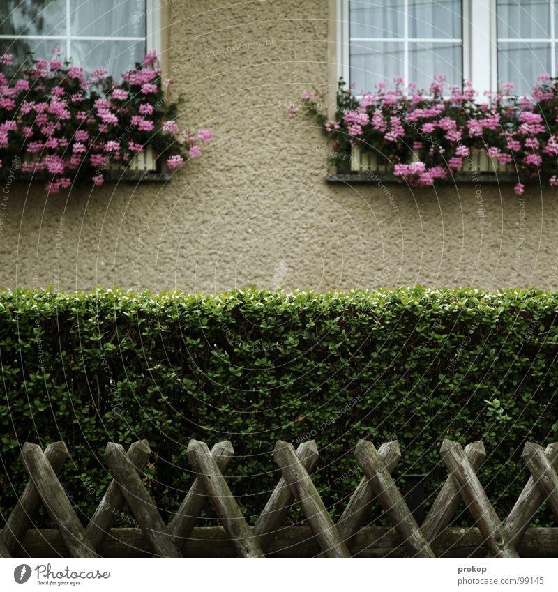 Kleinbürgertum - I Pflanze Blume Fenster Holz Garten Linie Fassade Trauer Sauberkeit Idylle Zaun gemütlich Verzweiflung Gardine Sportveranstaltung Tradition