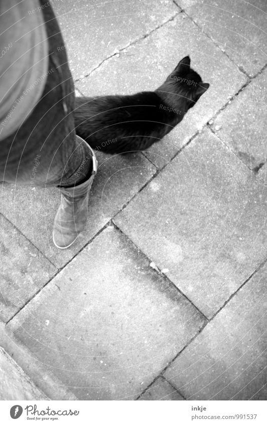 schwarzer Kater von links Beine Fuß 1 Mensch Jeanshose Stiefel Katze Tier berühren stehen Gefühle Stimmung Vertrauen Freundschaft Zusammensein Tierliebe