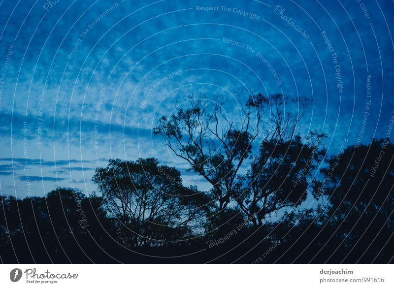 Blue night Himmel Natur blau Sommer Baum Erholung Freude Freiheit außergewöhnlich ästhetisch Lächeln fantastisch beobachten Schönes Wetter Lebensfreude