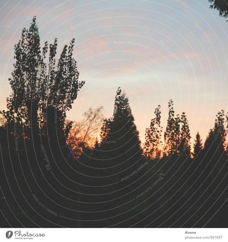 AST7 Pott | neuer Tag Landschaft Urelemente Himmel Wolken Sonnenaufgang Sonnenuntergang Schönes Wetter Baum Sträucher positiv blau gold rosa schwarz Vorfreude