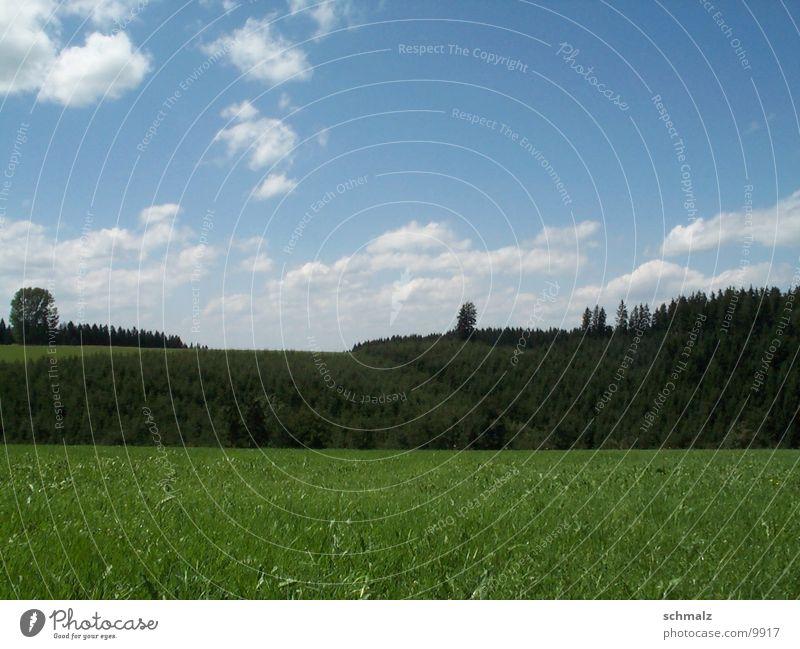 feld Feld grün Baum Berge u. Gebirge Himmel Rasen